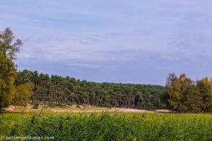Nida Forest